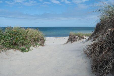 Beach Dune Landscape in Summer on Cape Cod Archivio Fotografico
