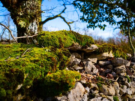 Moss Covered Stone Wall At The Edge Of A Farm