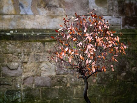 A Tree Growing Alone In A Walled City Banco de Imagens