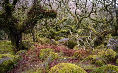 Forest interior with various rocks, mosses and lichens coating everything in green, brown and grey.