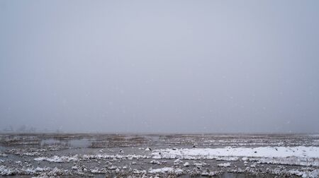 Snow falls over a salt marsh on Cape Cod in the winter.