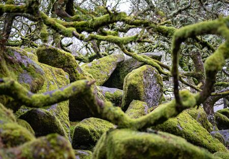 Moss Covers Rocks and Trees Alike In An Old Growth Forest Stock Photo