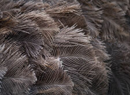 Grey and Brown Ostrich feathers take up the whole frame.