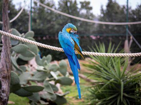 A Blue and Gold Macaw perched on a rope in a park.