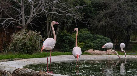 Four pink flamingos stand at the edge of the water with long legs and a long neck.