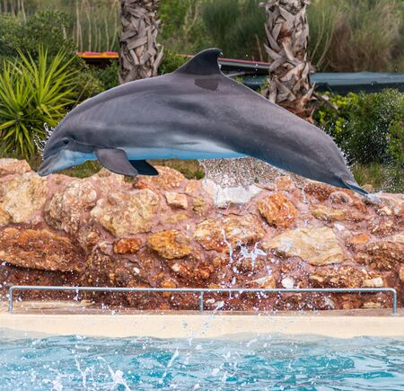 A bottle nosed dolphin with water streaming from its body seems frozen in mid air.