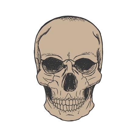 Vector hand drawn human skull sketch style. Illustration
