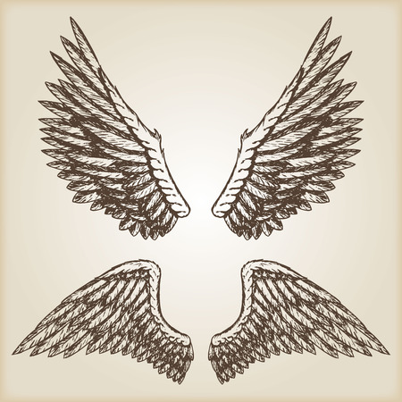 Hand drawn vector vintage illustration - naturalistic spread wings sketch.. Brown paper background.