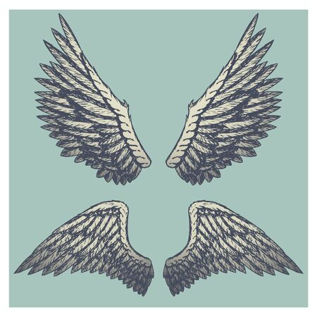 naturalistic: Hand drawn vector vintage illustration - naturalistic spread wings sketch.