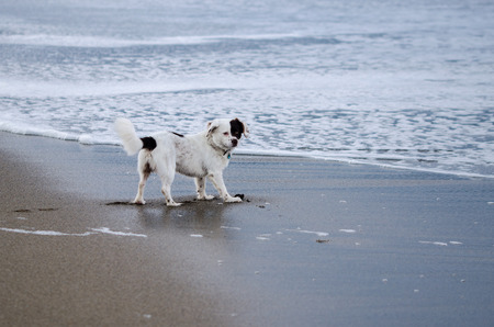 two faced: Dog by the sea side