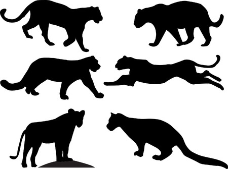 big cats collection vector Stock Vector - 5409611