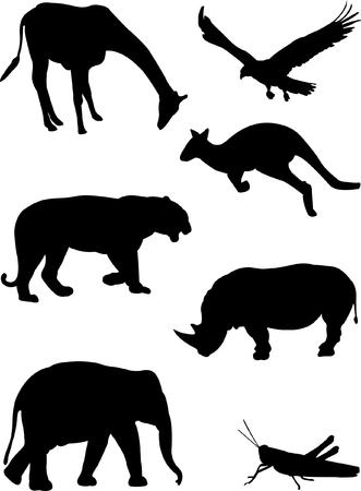 girafe: different animals