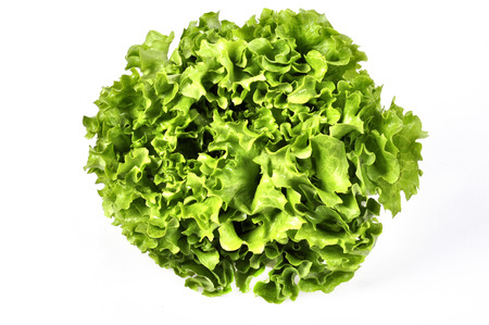 vitamin rich: Fresh green lettuce salad leaves closeup. Vegetable salad lettuce Stock Photo