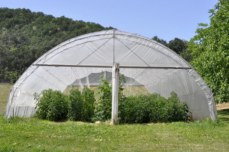 greenhouse with plastic film which raised early tomatoes peppers and other vegetables seedlings.