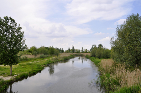 View of the river in the forest area on a summer day.
