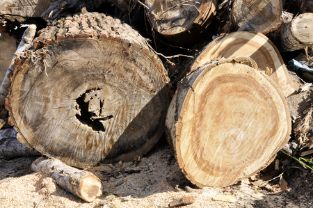 Pile of wood logs for interesting backgrounds and textures. For creative ideas.
