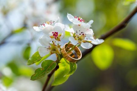 Trouwringenclose-up met kersenbloemen Stockfoto