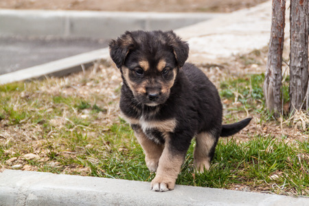 Uncnown breed puppy with black fur and brown spots photo
