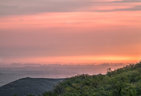 Trees covered in sunrise fog photo