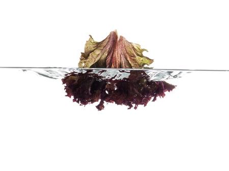 Red lettuce leaf falling underwater. Fresh vegetables. photo
