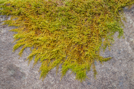 sump: Green moss over a stone close-up