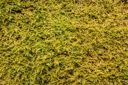 sump: Sfondo verde muschio primo piano