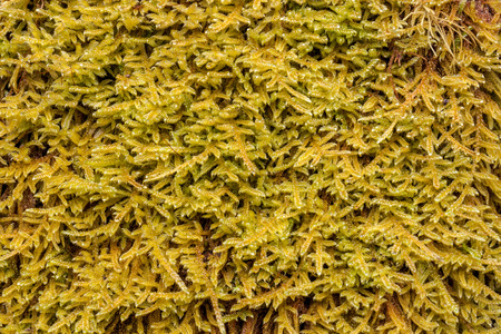 sump: Green moss background close-up Stock Photo