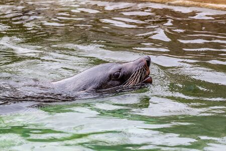 pup: Seal pup swimming and making funny moves in the water