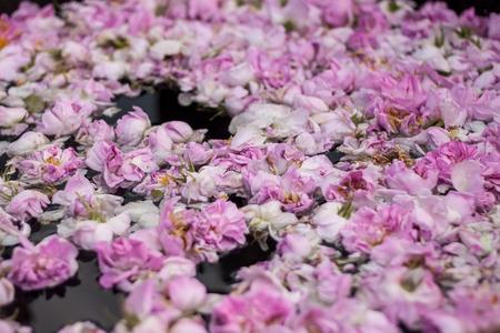 bulgarian: Brewing Bulgarian pink rose petals to get the rose oil.