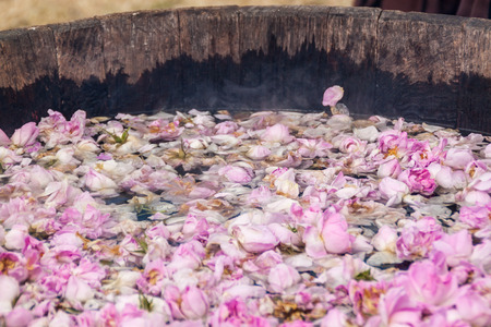 Brewing Bulgarian pink rose petals to get the rose oil.