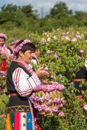 succesful: GORNO CHERKOVISHTE, BULGARIA - MAY 31, 2015 - Rose picking ritual in Gorno Izvorovo village. People dressed up in a traditional folklore costumes sing and dance for health and succesful harvest of the Bulgarian Roses.