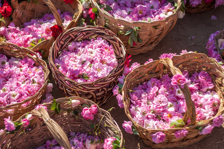 Bascket gevuld met Bulgaarse roze rozen Stockfoto - 41621585