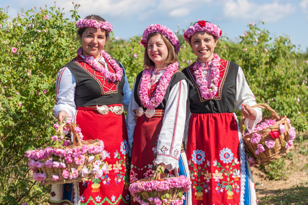 bulgaria: Women dressed in a Bulgarian traditional folklore costume picking roses in a garden, as part of the summer regional ritual in Rose valley, Bulgaria.