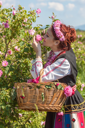 Woman dressed in a Bulgarian traditional folklore costume picking roses in a garden, as part of the summer regional ritual in Rose valley, Bulgaria. Stock Photo