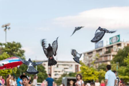 central square: Pigeons fly away from the central square in Plovdiv, Bulgaria Editorial