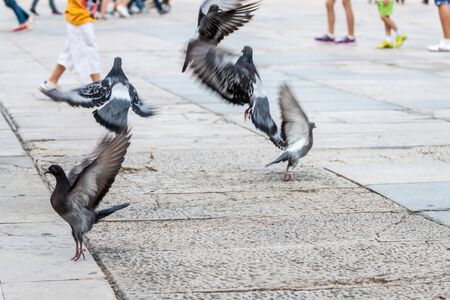 central square: Pigeons fly away from the central square in Plovdiv, Bulgaria Stock Photo