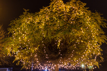 corona navidad: Tree crown decorated with a lot of Chrismtas lights