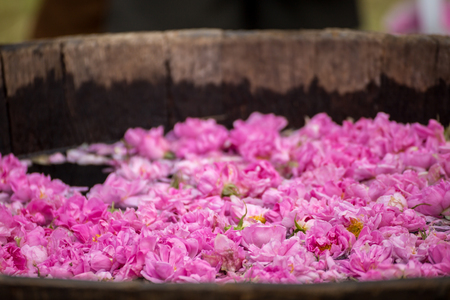 fermenting: Traditional way of boiling and fermenting rose water.