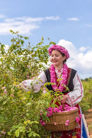 bulgaria girl: Bulgarian girl dressed in traditional dress picking roses during the Annual Rose Festival in Kazanlak, Bulgaria