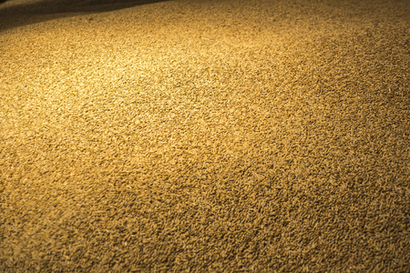 malted: Big pile of barley grain in a storage house. Stock Photo