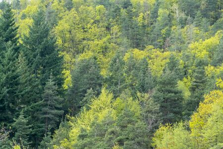 Mixed deciduous and coniferous forest with amazing colors Stock fotó