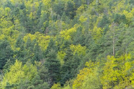 Mixed deciduous and coniferous forest with amazing colors Stock fotó - 124565199
