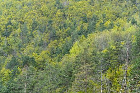 Gemischter Laub- und Nadelwald mit tollen Farben Standard-Bild