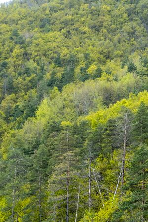 Mixed deciduous and coniferous forest with amazing colors Stock fotó - 124566089