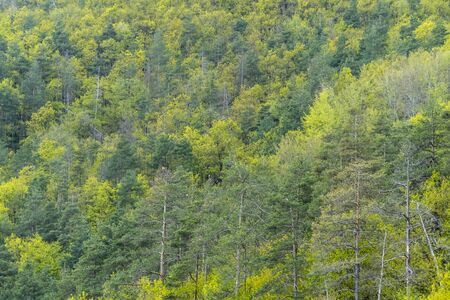 Mixed deciduous and coniferous forest with amazing colors Stock fotó - 124566205