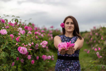 Young gril holding and smelling the bulgarian pink rose in a garden with beautiful sky in the background