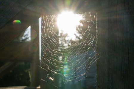 Beautiful spider web on wooden with the sunset behind it. Pattern concept.