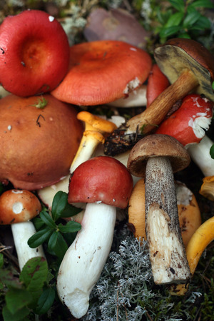 different types of wild mushrooms in the forest photo