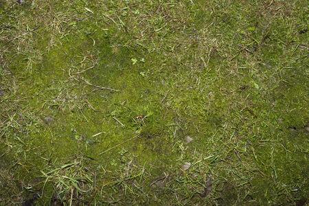 soft and beautiful green moss 版權商用圖片