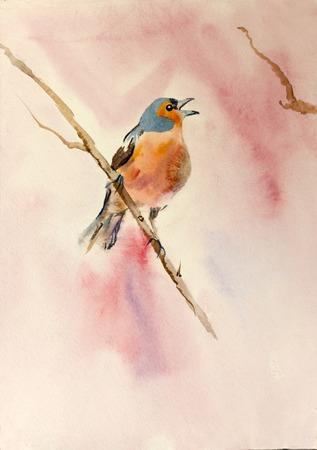 木の枝にオレンジ色の鳥 写真素材